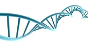 تغییر ژنتیکِ خودجوش در طول زندگی زنبور عسل