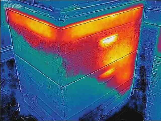 دقت سنجش گرما و سرما در زنبور عسل