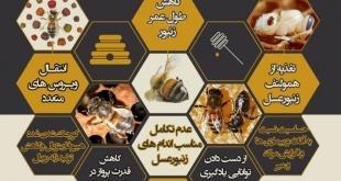 چگونه کنه واروآ به کلنی های زنبور عسل خسارت وارد می کند ؟