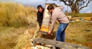 حافظه ده روزه زنبور عسل و تاثیر آن بر کوچ
