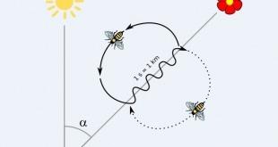 زبان رقص زنبورها